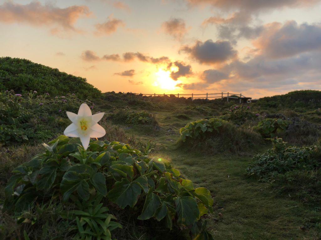 宮古島の自然